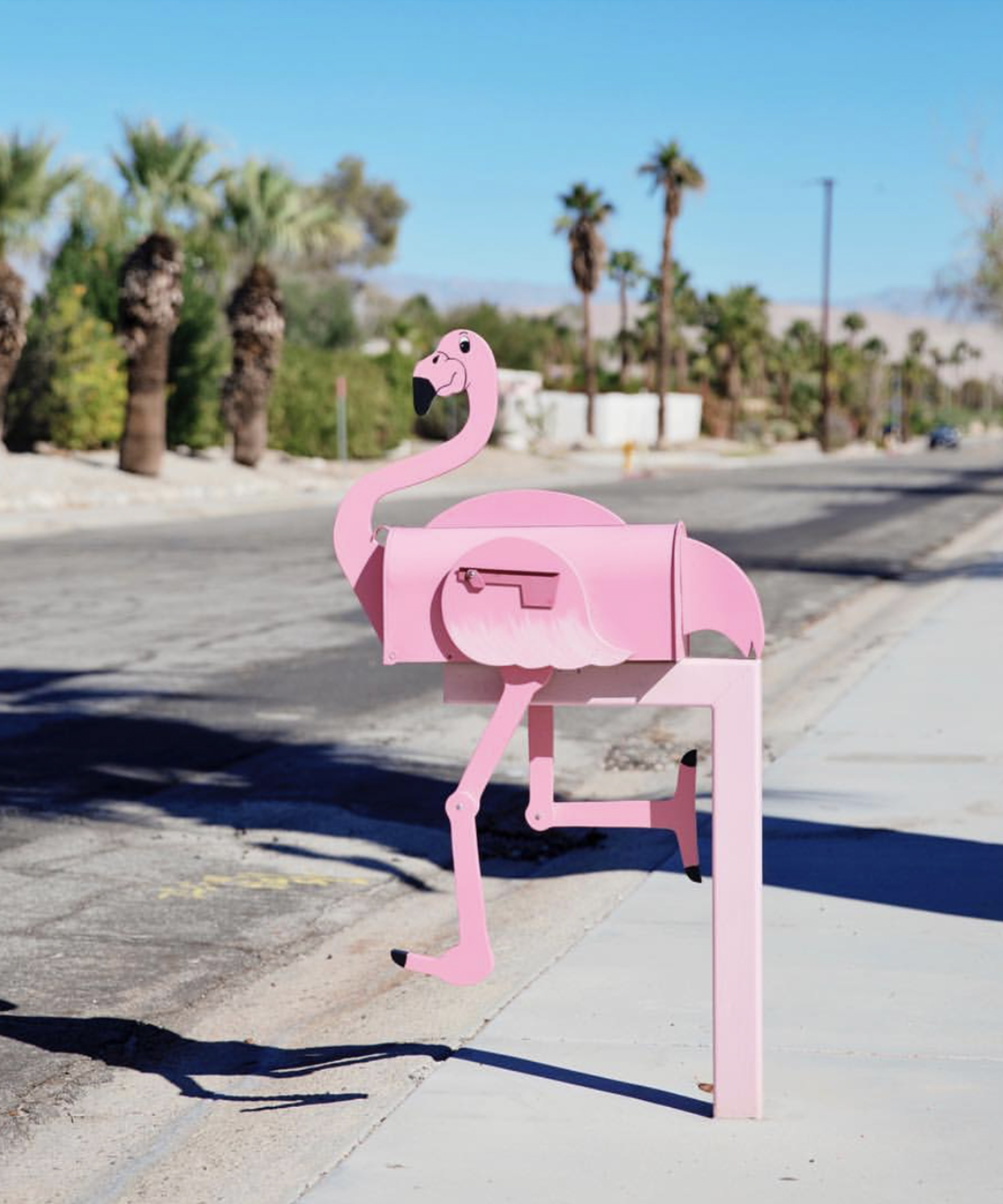 Flamingo- Modernism Week