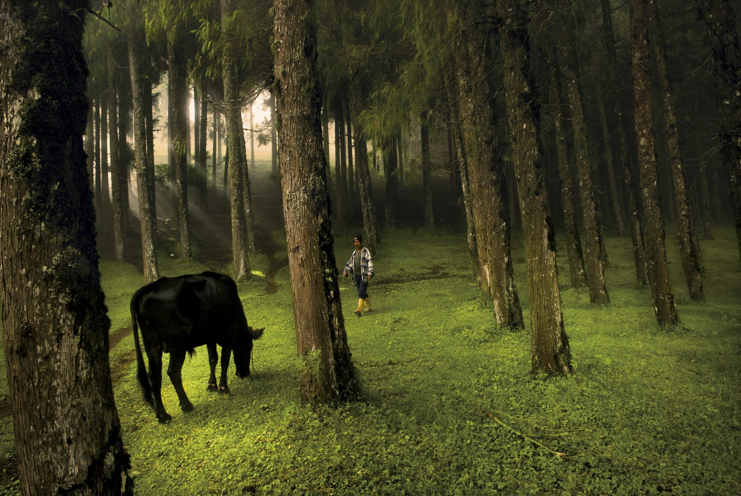 A man walks through a forest in Rethung Gonpa village outside of Trashigang, in east Bhutan, 